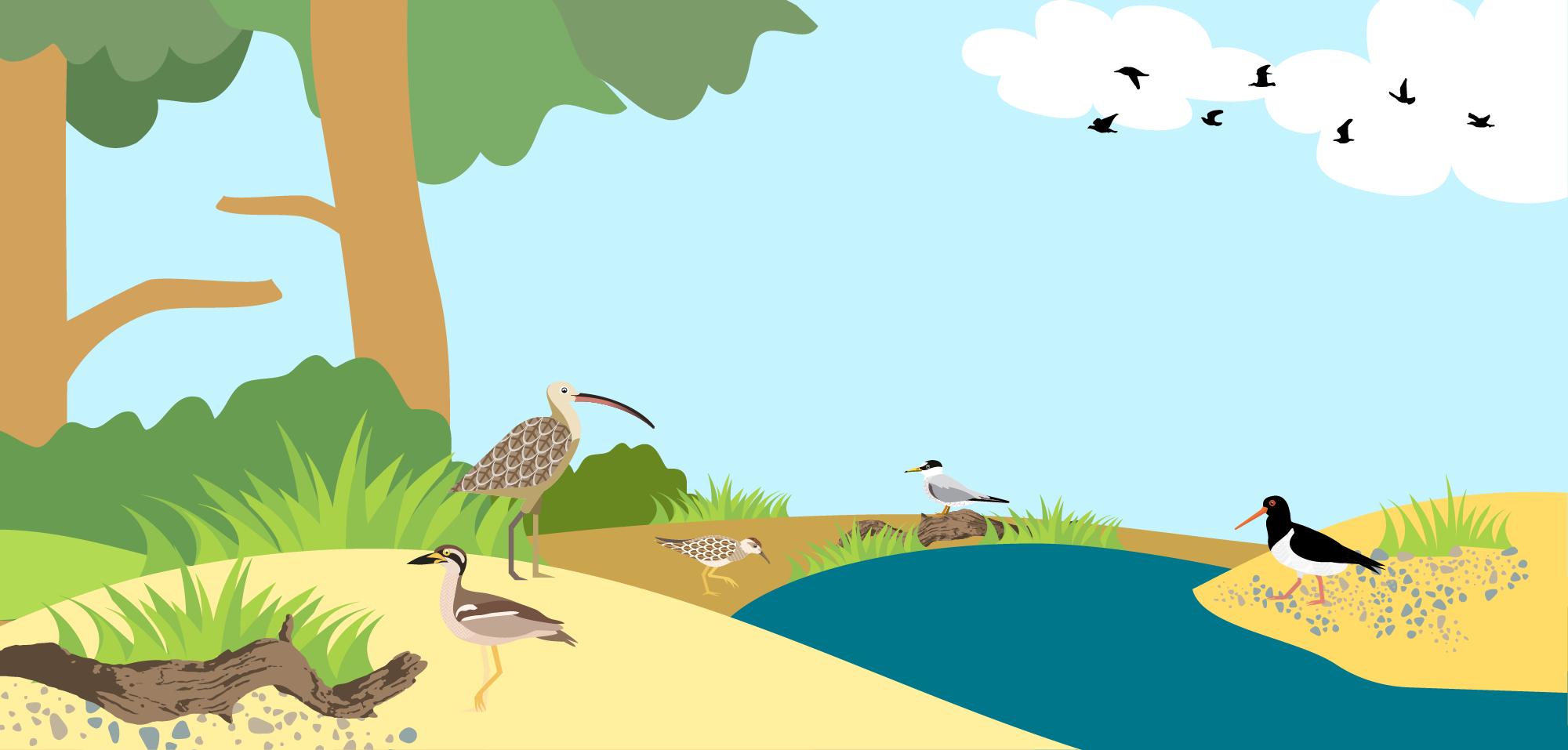 Shorebird Struggle