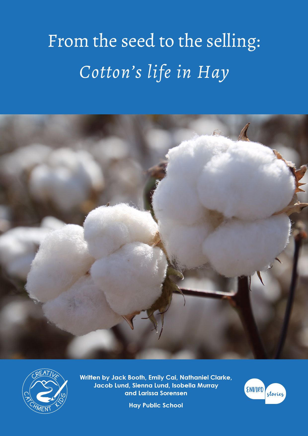 From the seed to the selling: Cotton's life in Hay