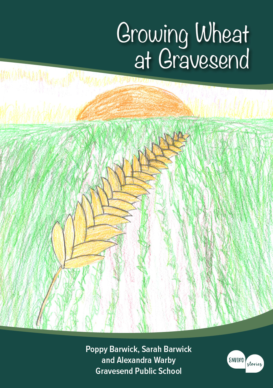 Growing Wheat at Gravesend