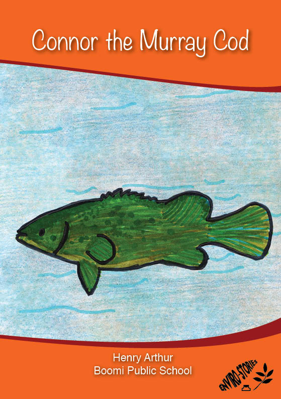 Connor the Murray Cod